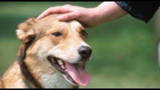Как погладить собаку