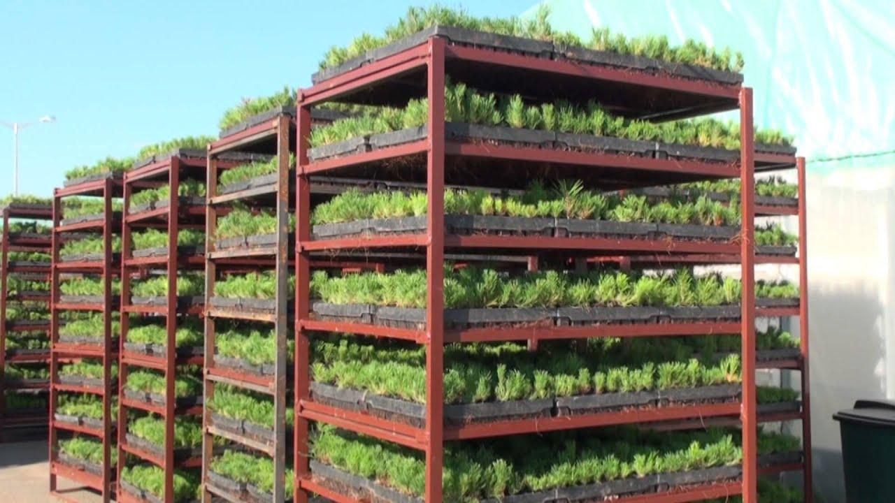 17 май 2016. Уважаемые клиенты в продажу поступила рассада овощей и цветочных культур. Эти растения уже готовы для пересадки в открытый грунт. Рассада продается как оптом.
