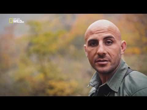 Nat Geo Wild HD LAST LEOPARDS EUROPE (Azerbaijan)