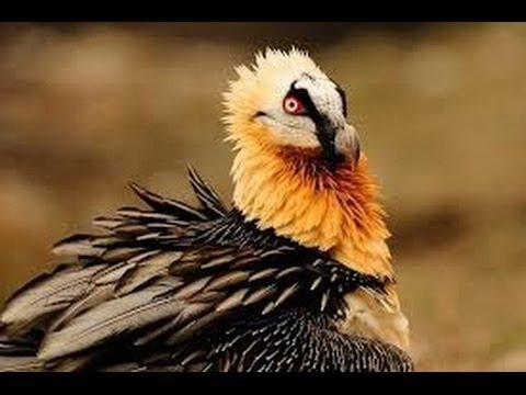 Angry birds funny video cute birds youtube - Funny bird pics ...