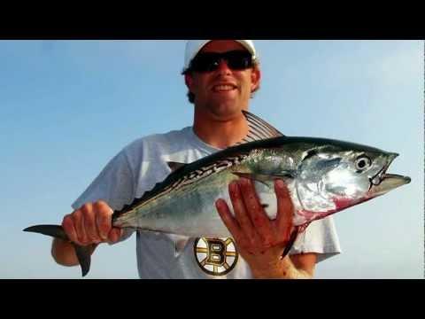 Fishers Island Albies