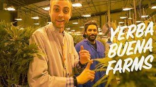 Inside a Sustainable Indoor Cannabis Farm | Yerba Buena Farms: Hillsboro, Oregon YouTube Videos