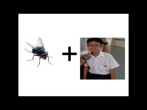 What do you call a wingless fly?