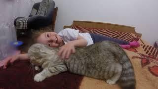 Ребенок Гладит, а Кошка Хлоя балдеет 😻 Шотландская Вислоухая Кошка Просит Кота 🐱 Коты и Дети  Cat