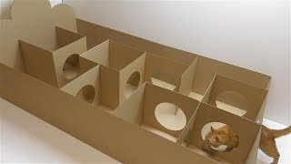 How to make a labyrinth for a cat made of cardboard DIY Cardboard bed
