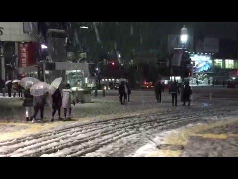 Heavy snow in Tokyo. January 18th 2016. 雪 東京