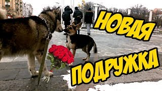 Знакомство с новой собакой  / УЛИЧНАЯ СУЧКА