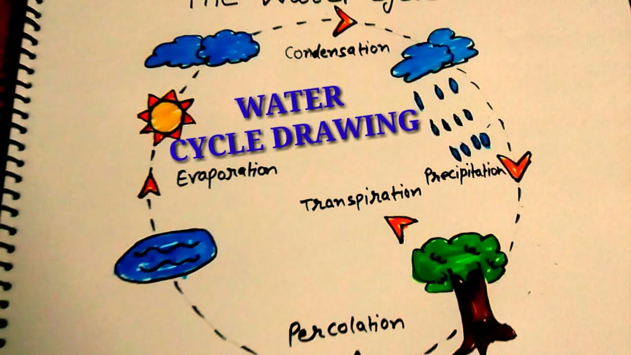 Water cycle drawing for kids easy step by step
