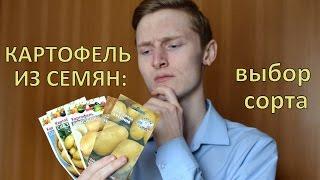 Как вырастить элитный картофель из семян. Выбор Сорта