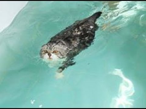 Funny cats | Lesson for cat :Learn to Swim in the pool