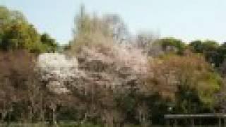 Under the Asbestos Eaves: Two Years in Japan Part 13