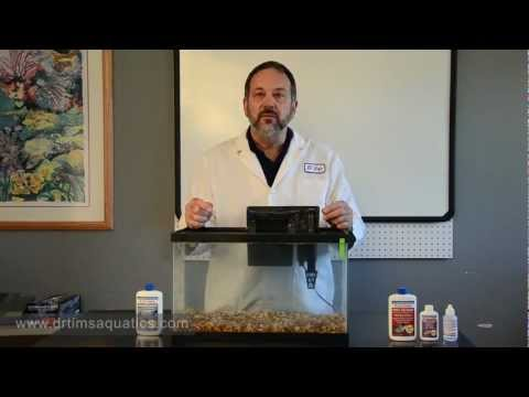 How To Set Up A New Aquarium - Fishless Cycling  - DrTim's Aquatics