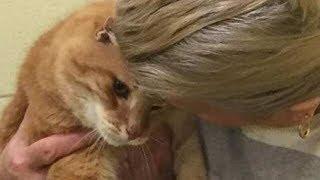 Женщина забрала кота из приюта, а на следующий день вернулась за вторым