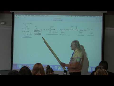 35. Ahern's BB 350 at Oregon State University - Nitrogen Metabolism