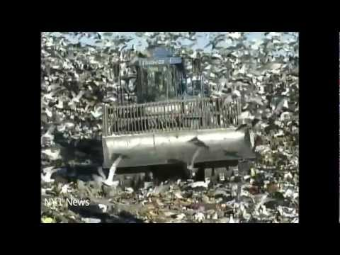 The Fresh Kills Story: From World's Largest Garbage Dump