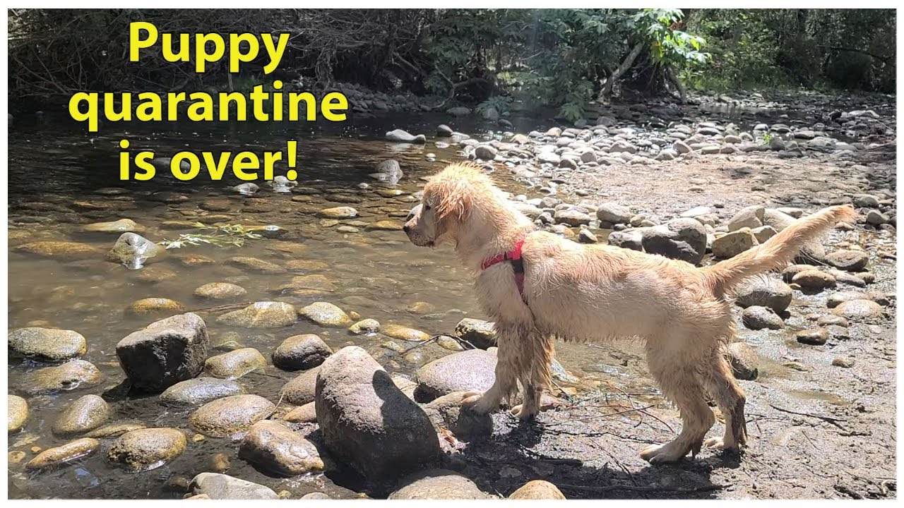 Puppy goes to the river for the first time | Oshies World