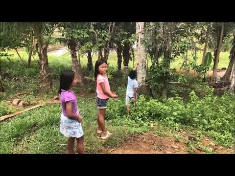 HARVESTING THE MIRACLE FRUITS THAT WILL CURE CANCER IN OUR FARM YARD EXPAT  PHILIPPINES
