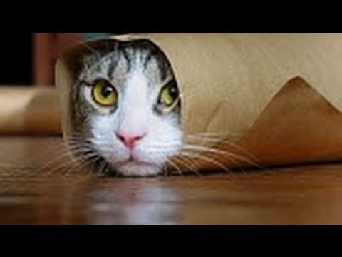 How To Make A Burrito Cat Youtube