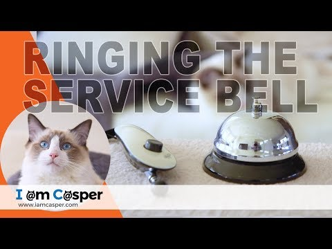 HOW to TEACH your cat to Ring the Service Bell - Part ONE - Clicker Training for Cats