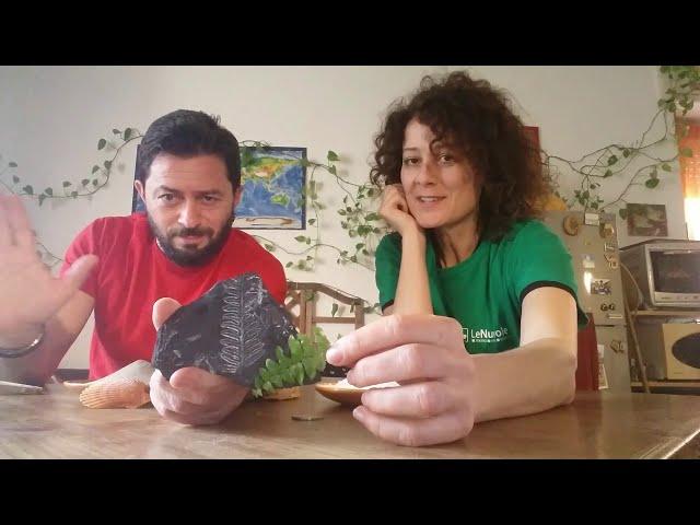 A spasso nel Carbonifero - Le Nuvole Scienza #comunicarescienza #giocaconlenuvole #carbonifero