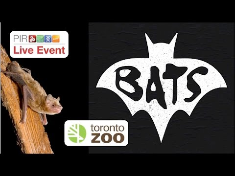 PIR Live Event - Toronto Zoo Bat Research & Conservation