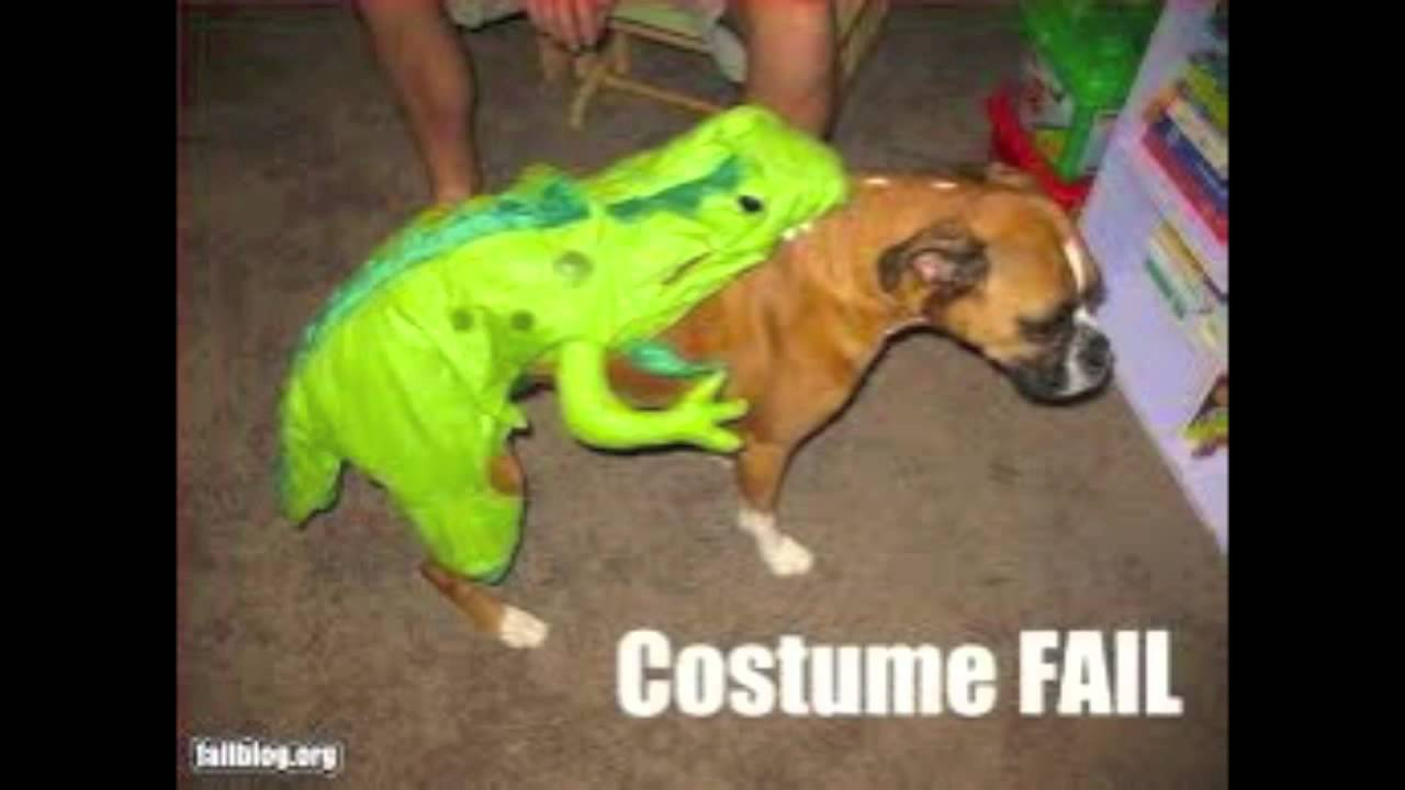 cute and funny dog costumes!!! - YouTube