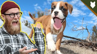 What To Do With A NEW BOXER PUPPY?!