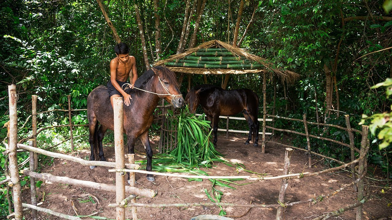 Take Care Of A Horse and Feed A Horse under roof thatched hut