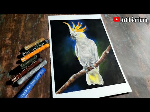 Cockatoo Parrot drawing with Oil Pastel- Step by Step