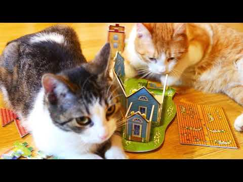 Cats building a house 4k UHD
