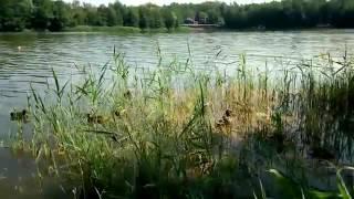 Калининградская обл.-Голубые озёра-Утки(, 2017-01-03T16:51:30.000Z)