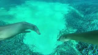видео Дайвинг на Сардинии  —  Отдых в Италии. Туры в Италию. Отели Италии