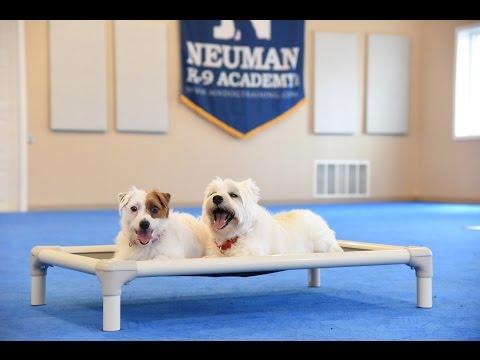 James (West Highland Terrier) & Lizzie (JRT) Dog Training Demonstration