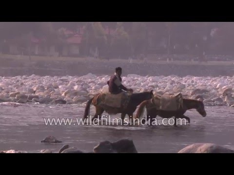 Man rides pony along Ramganga river in Uttarakhand