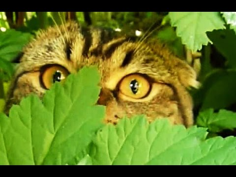 Outdoor Adventures | Funny Cats  Compilation
