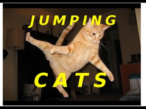 Jumping Cats Compilation – Funny Cat Video