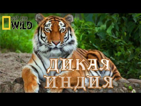 Тайны дикой природы Индии. Мир диких животных. #Документальный фильм. National Geographic - Видео онлайн
