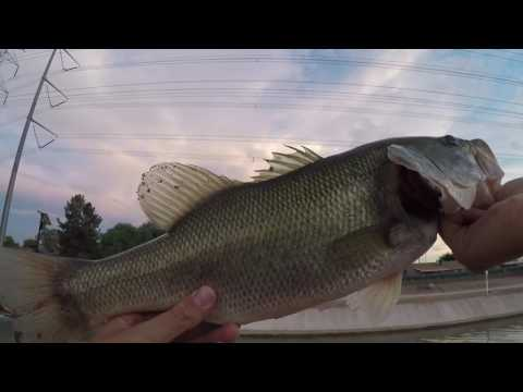 !!ARIZONA CANAL FISHING!!