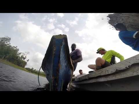 Underwater Forest Harvesting in Panama