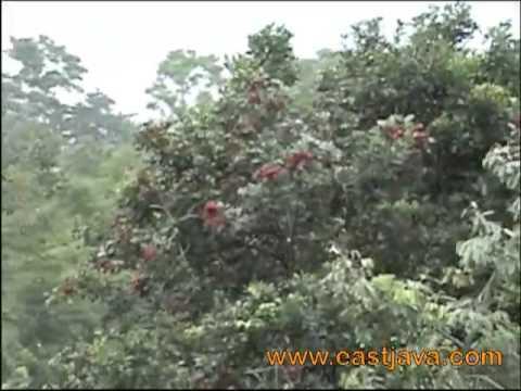 Bakti Alam Agro Wisata - Pasuruan - East Java