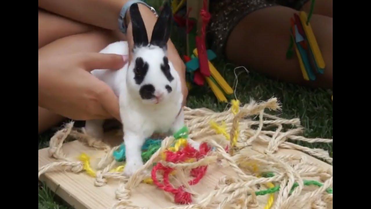 Juguetes Juguetes Antiestrés Antiestrés Conejos Para ZuOkXiP