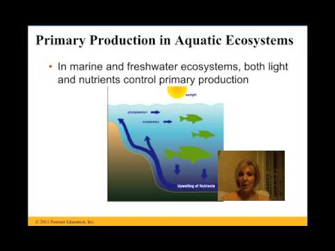 Ecosystems Lecture Chapter 55 Campbell Biology