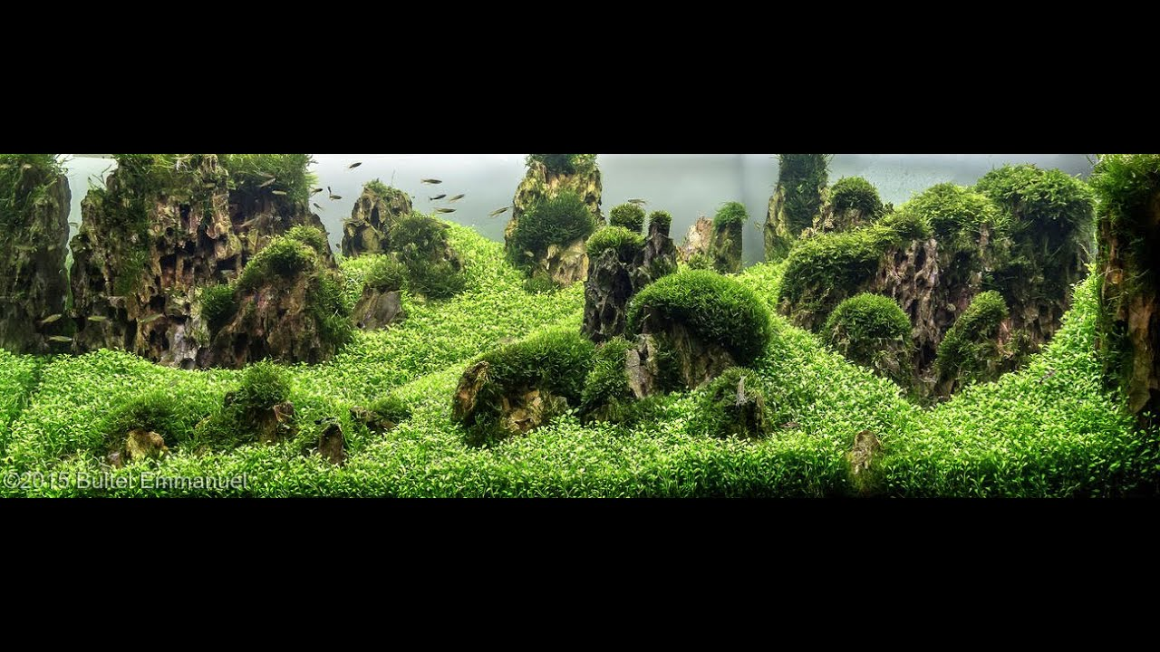 Aquascaping 2016 - YouTube
