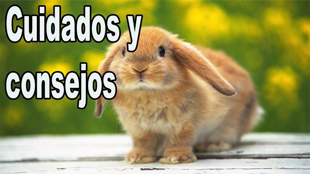 Conejos cuidados b sicos youtube - Cuidados de una hortensia ...