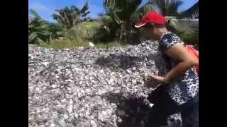 gutalac chromite zamboanga del norte