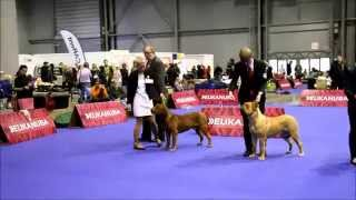 European Dog Show 2014 Dogue De Bordeaux