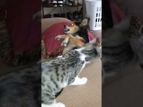 Cat vs dog brutal attack
