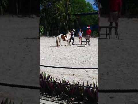 So abbie got to ride a horse today In Dominican Republic  (good times)