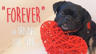 Amazing dog ❤ song & video