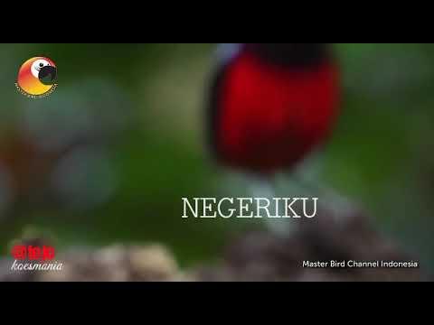 NEGERIKU KOESPLUS 88